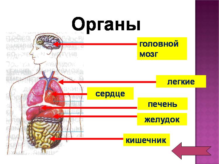 Как сделать свой организм 739